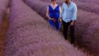 Séance photographique maternité dans les champs de lavandes a Nyons photo Armen Hambardzumian